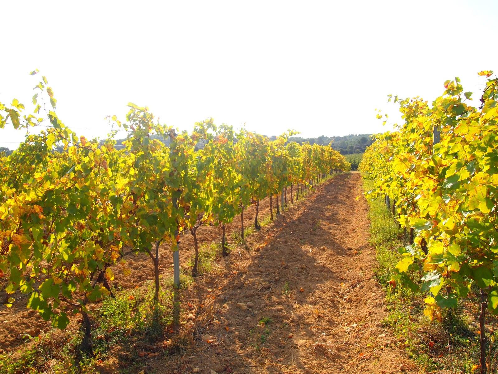 収穫はすでに終わっておりまったく葡萄はありませんでした
